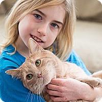Adopt A Pet :: Meowzer - Chicago, IL
