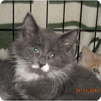 Adopt A Pet :: Blaze - Riverside, RI