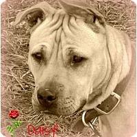 Adopt A Pet :: *Daisy* - Hancock, MI