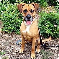 Adopt A Pet :: Madison - Santa Monica, CA