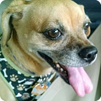 Adopt A Pet :: Bailey (female) - Plainview, NY