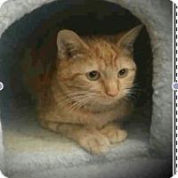 Adopt A Pet :: Bailey Belle - Colorado Springs, CO