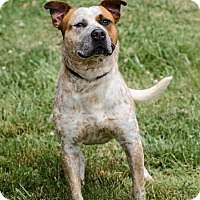 Adopt A Pet :: #428-14 ADOPTED! - Zanesville, OH