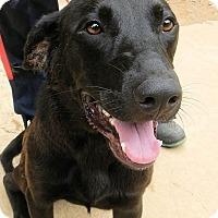 Adopt A Pet :: *Troy - PENDING - Westport, CT