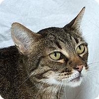 Adopt A Pet :: Lilly M - Sacramento, CA