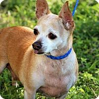 Adopt A Pet :: Mica - Brownsville, TX