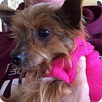 Adopt A Pet :: Maddie - Mount Laurel, NJ