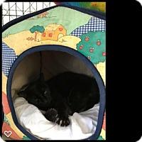 Adopt A Pet :: Otis - Fallbrook, CA