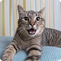 Adopt A Pet :: Charles - Wilmington, DE