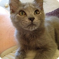 Adopt A Pet :: Ivy - Monroe, GA