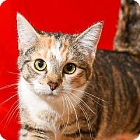 Adopt A Pet :: Bronte - Athens, GA