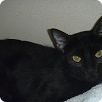 Adopt A Pet :: Mae - Hamburg, NY
