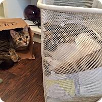 Adopt A Pet :: Xena - Valley Village, CA