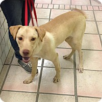 Adopt A Pet :: Cleveland - Newburgh, IN