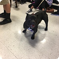 Adopt A Pet :: Clyde - Las Vegas, NV
