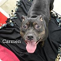 Adopt A Pet :: Carmen - Melbourne, KY