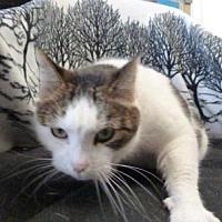 Adopt A Pet :: Mama Cat - South Haven, MI