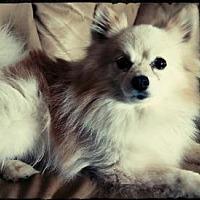 Adopt A Pet :: Leo - Delaware, OH