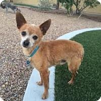 Adopt A Pet :: Louis - Las Vegas, NV