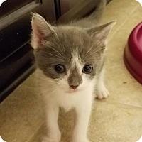 Adopt A Pet :: Jelly Bean - Herndon, VA
