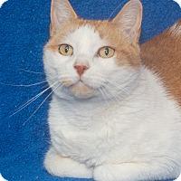 Adopt A Pet :: Sonny - Elmwood Park, NJ