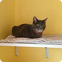 Adopt A Pet :: Jersey - Lancaster, MA