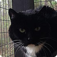 Adopt A Pet :: Nook Nook - Monroe, GA