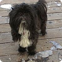 Adopt A Pet :: Tipsy - Denver, CO