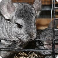 Adopt A Pet :: Lola,  Pip & Riley - Virginia Beach, VA