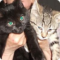 Adopt A Pet :: Gigi and Luigi - Colmar, PA