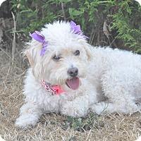Adopt A Pet :: Gabby - Tumwater, WA