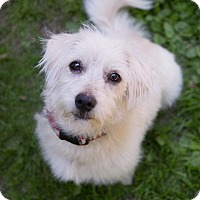 Adopt A Pet :: Howie - Drumbo, ON