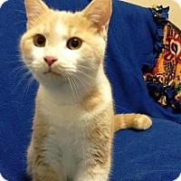 Adopt A Pet :: Yoshi - Americus, GA