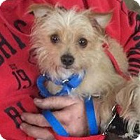 Adopt A Pet :: BUMBLE BEE - Westmont, IL