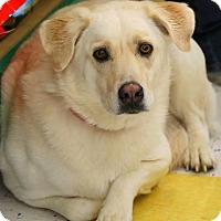 Adopt A Pet :: Gabby - Lafayette, IN