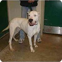 Adopt A Pet :: Ham-Bone - Sierra Vista, AZ