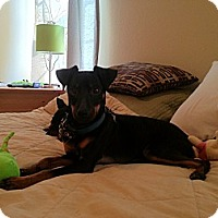 Adopt A Pet :: Milo - Topeka, KS