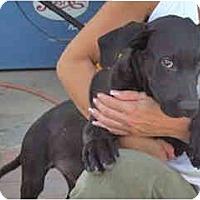 Adopt A Pet :: ABO - Scottsdale, AZ