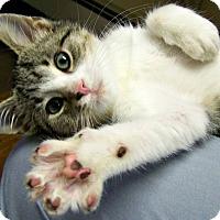 Adopt A Pet :: Aramis - Toledo, OH