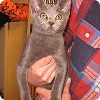 Adopt A Pet :: Storm - Colmar, PA