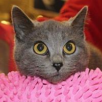 Adopt A Pet :: Rhonda - Louisville, KY