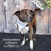 Adopt A Pet :: TREMENDOUS REX - Conroe, TX
