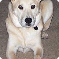 Adopt A Pet :: Lexi *FOSTER* - Appleton, WI