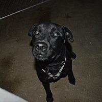 Adopt A Pet :: King - Peyton, CO
