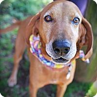 Adopt A Pet :: Langford - Plainfield, CT