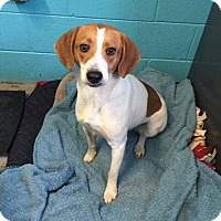 Adopt A Pet :: Reagan - Irmo, SC