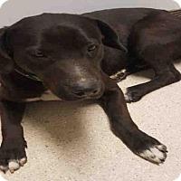 Adopt A Pet :: A1055407 - Bakersfield, CA