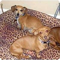 Adopt A Pet :: Chrissy & Corey - San Jose, CA