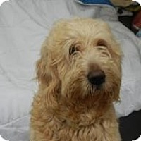 Adopt A Pet :: Danny Boy ADOPTED!! - Antioch, IL
