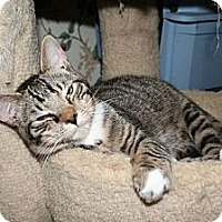 Adopt A Pet :: Owens - Santa Rosa, CA